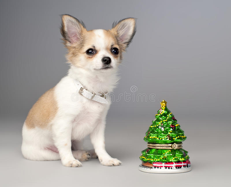 Cute chihuahua puppy and toy christmas tree royalty free stock images