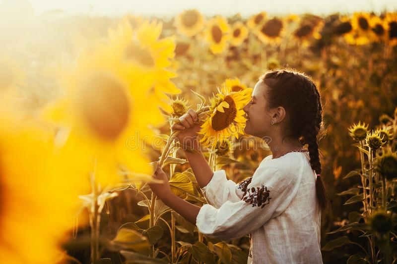 Cute child in a blossoming sunflower field royalty free stock photos