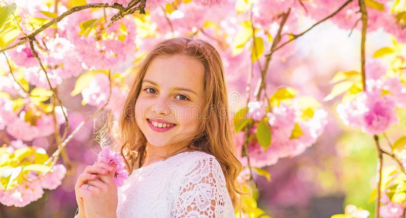 Cute child enjoy aroma of sakura on spring day. Girl on smiling face standing near sakura flowers, defocused. Perfume. And fragrance concept. Girl with long royalty free stock photography