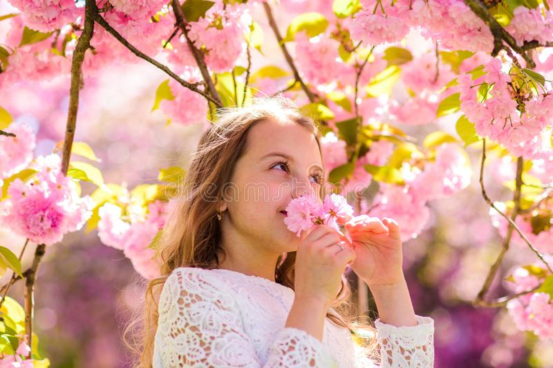 Cute child enjoy aroma of sakura on spring day. Girl on smiling face standing near sakura flowers, defocused. Sweet. Childhood concept. Girl with long hair stock image