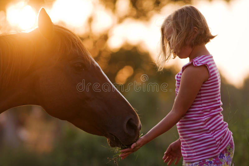 Cute child feeding her handsome horse stock image