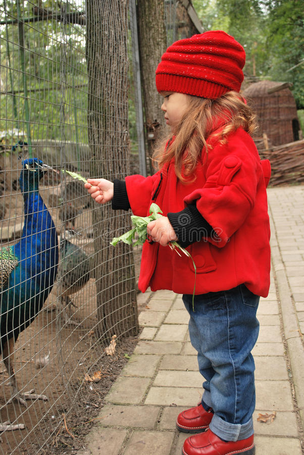 Download Cute Child Feeding Peacocks Stock Photo - Image of cute, toddler: 16470296