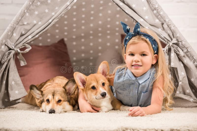 Cute child with welsh corgi dogs lying in wigwam and looking. At camera stock photography