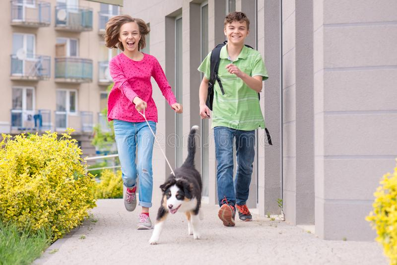 Teen boy and girl playing with puppy. Cute children - happy teen boy and girl playing with puppy Australian Shepherd dog, outdoors. Friendship and care concept royalty free stock images
