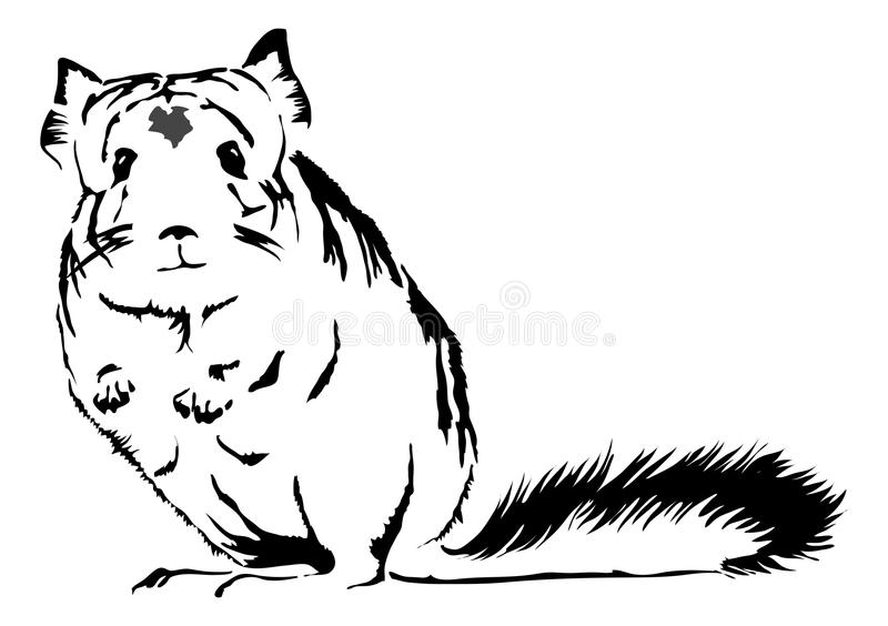 Cute Chinchilla looking curious stock illustration