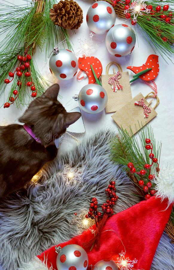 Cute Christmas concept with black kitten playing with decorations. royalty free stock photo