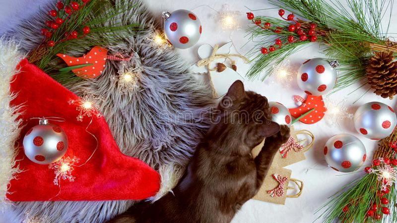Cute Christmas concept with black kitten playing with decorations. royalty free stock photos