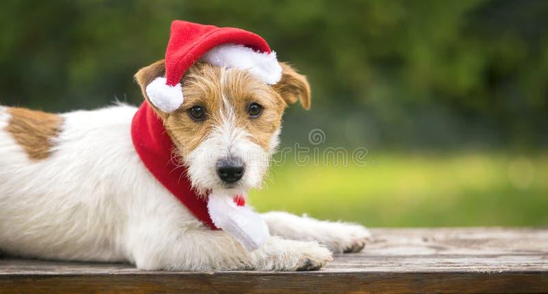 Cute Christmas pet dog with Santa Claus hat. Cute Christmas pet dog puppy with Santa Claus hat - greeting card, web banner idea stock photo