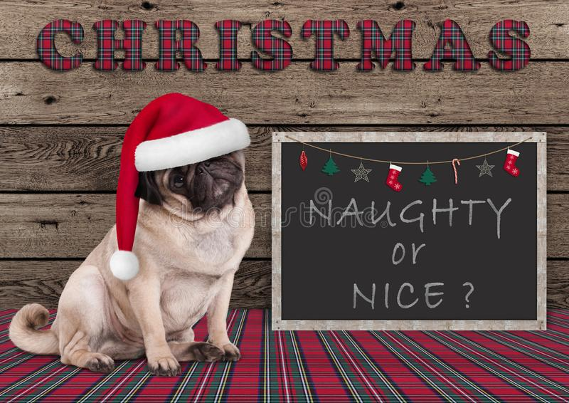 Cute Christmas pug puppy dog with santa hat and blackboard with text naughty or nice royalty free stock image