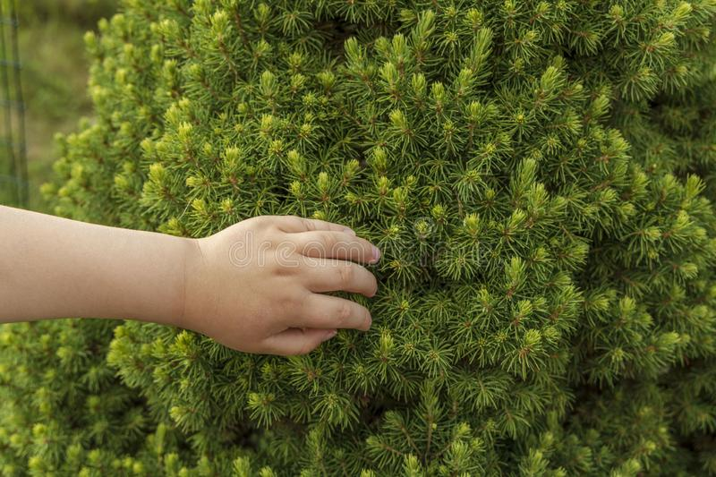 Cute close up view of child`s hands taching green tree. Beautiful green nature backgrounds.  stock images