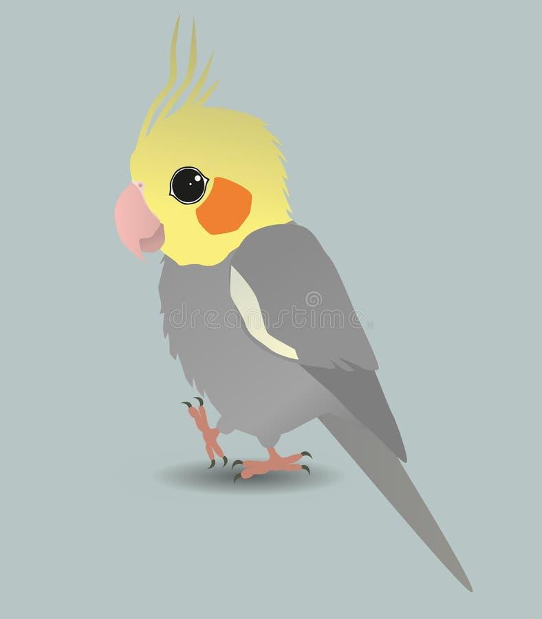 Cute cockatiel stock illustration