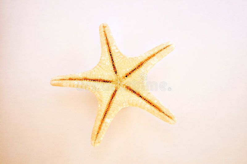 Cute colored starfish stock images