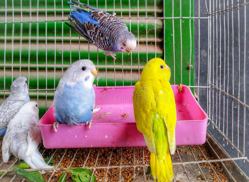 Cute Colorful Love Bird Family Inside The Cage Having Fun royalty free stock images