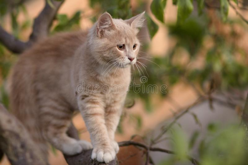 Cute confused cat on tree branch , funny animals, kitten walking outdoors stock photography