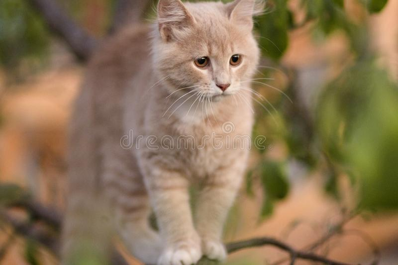 Cute confused cat on tree branch , funny animals, kitten walking outdoors royalty free stock photography
