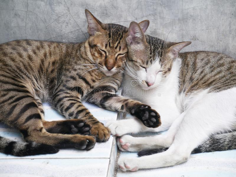 Cute couple cats sleeping together grey concrete background royalty free stock photo