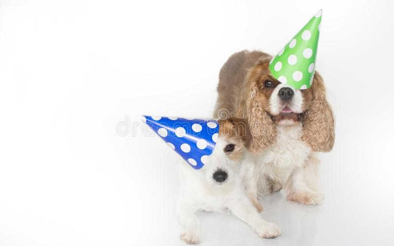 CUTE COUPLE CELEBRATING A BIRTHDAY PARTY AND WEARING A BLUE AND royalty free stock photo
