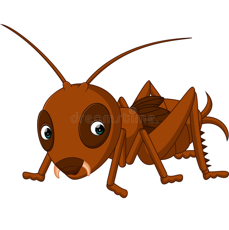 Cute cricket cartoon. Illustration of Cute cricket cartoon royalty free illustration