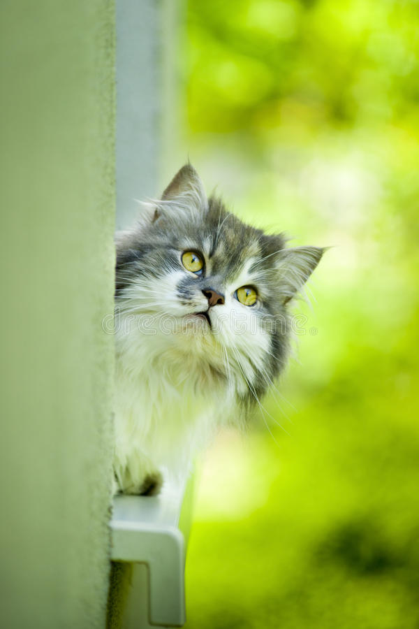 Cute Curious Cat. Royalty Free Stock Image