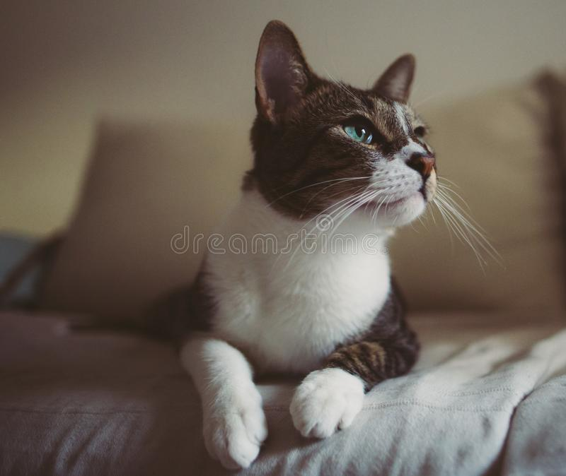 Cute curious domestic cat on bed. At home royalty free stock image