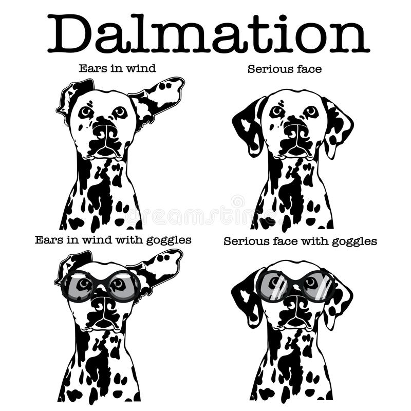 Cute Dalmatian dog with motorbike goggles and ears flapping in wind stock illustration