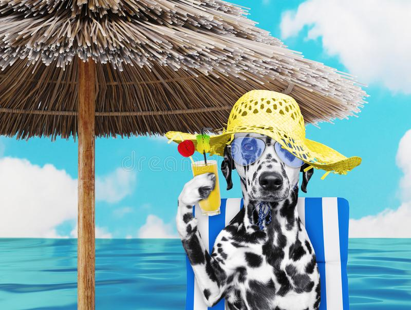 Cute dalmatian dog resting and relaxing on the beach chair under umbrella with juice at the beach ocean shore, on summer. Vacation holidays. 3d rendering stock image
