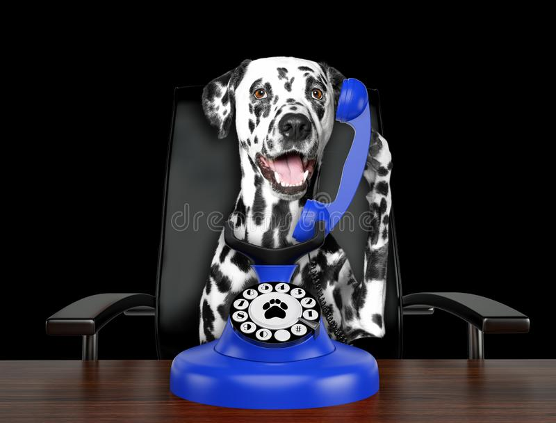 Cute dalmatian dog is talking by blue old dial telephone. Isolated on black. Background stock image