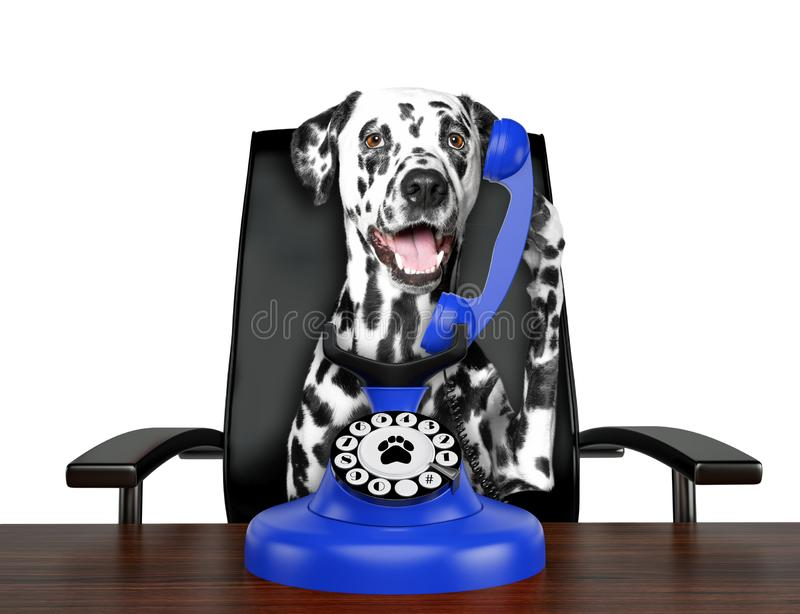 Cute dalmatian dog is talking by blue old dial telephone. Isolated on white. Background royalty free stock photos