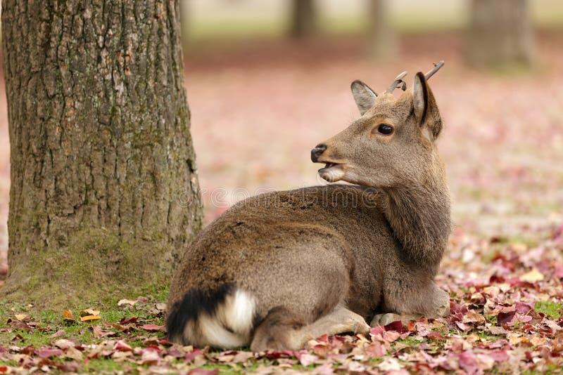Download Cute deer stock image. Image of brown, forest, cute, deer - 24170179