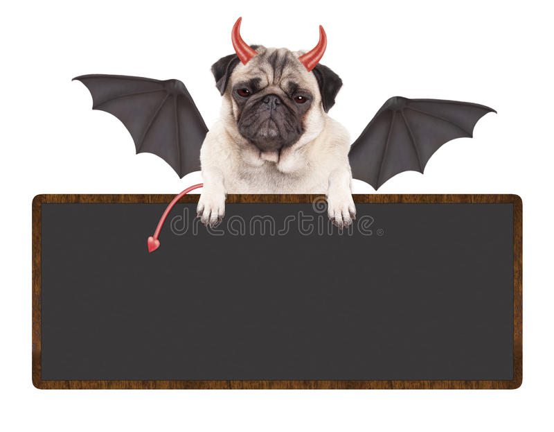 Cute devilish pug puppy dog dressed up for Halloween, holding blank sign, isolated on white background. Cute devilish pug puppy dog sitting down, dressed up for stock image