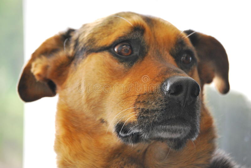 Download Cute Dog stock photo. Image of scared, canine, animal - 14399036