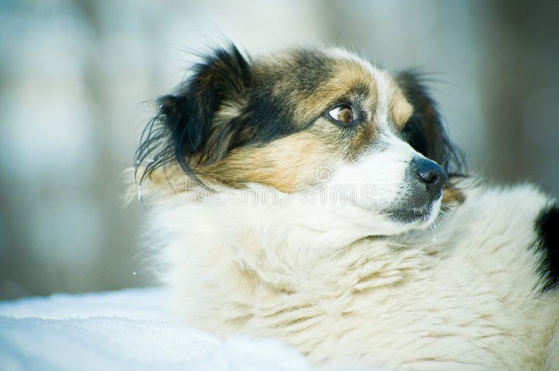 Download Cute dog stock image. Image of cute, domesticated, stare - 4040927