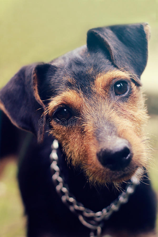 Free Cute Dog Stock Photography - 78062542