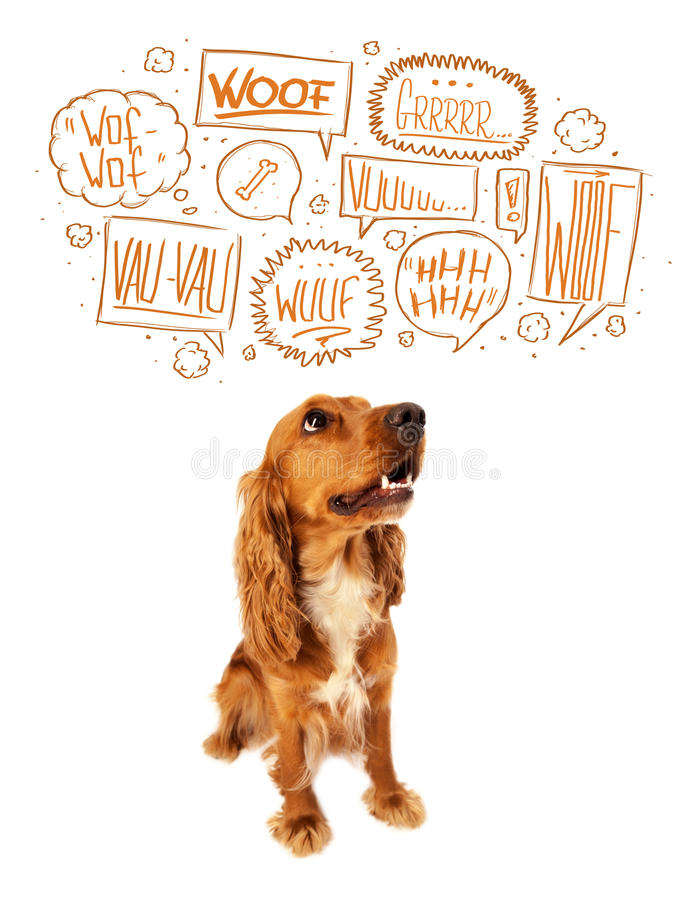 Cute dog with barking bubbles. Cute cocker spaniel with barking speech bubbles above her head stock photos