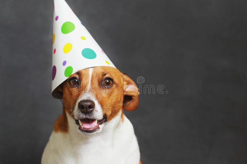 Cute dog in carnival party hat. Celebrating birthday on horizontal banner with space for text royalty free stock photography