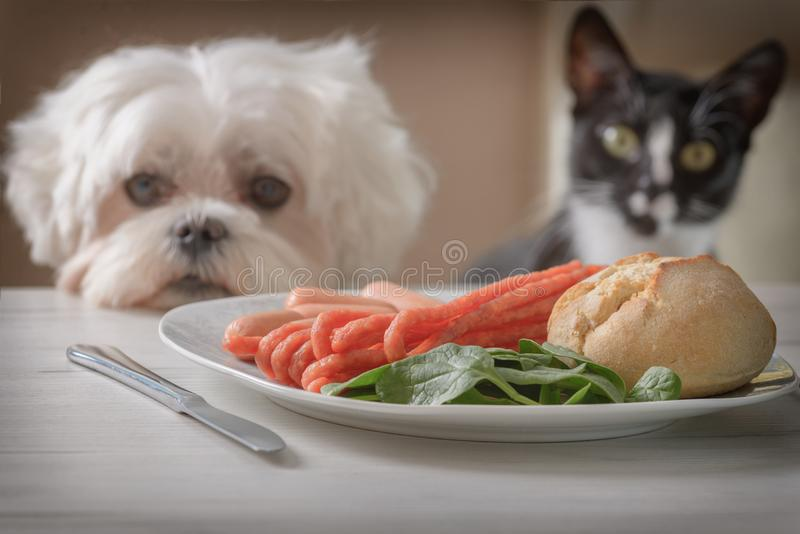 Cute dog and cat asking for food royalty free stock images