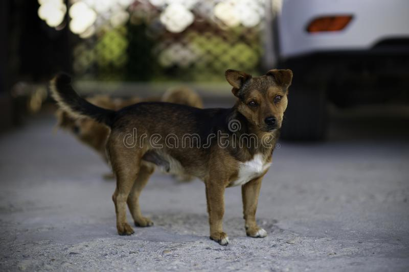Cute dog caught by dog catchers who is housed in a cage at the public shelter built by the town hall for dogs on the street or stock photo