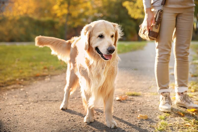 Cute dog with child in autumn park royalty free stock photo