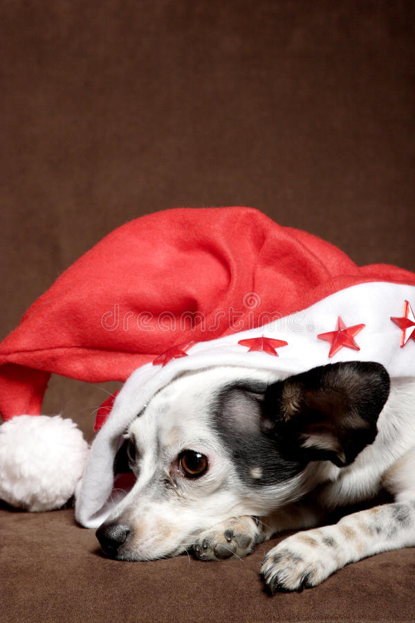 Cute dog with Christmas hat royalty free stock images
