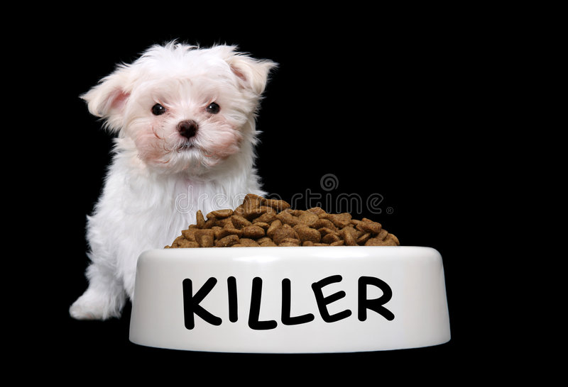 Cute Dog with Dog Bowl royalty free stock photography