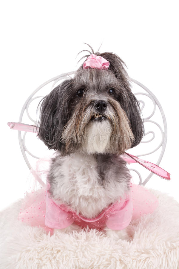 Cute dog dressed up like a fairy for Halloween stock image