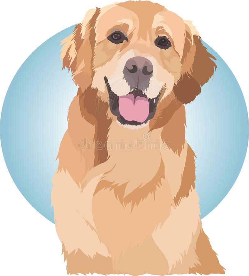 Cute Dog Golden Retriever Vector. This pet vector was made at my residence in the city of Cilegon. I made it using adobe illustrator software. I made this Dog stock photos