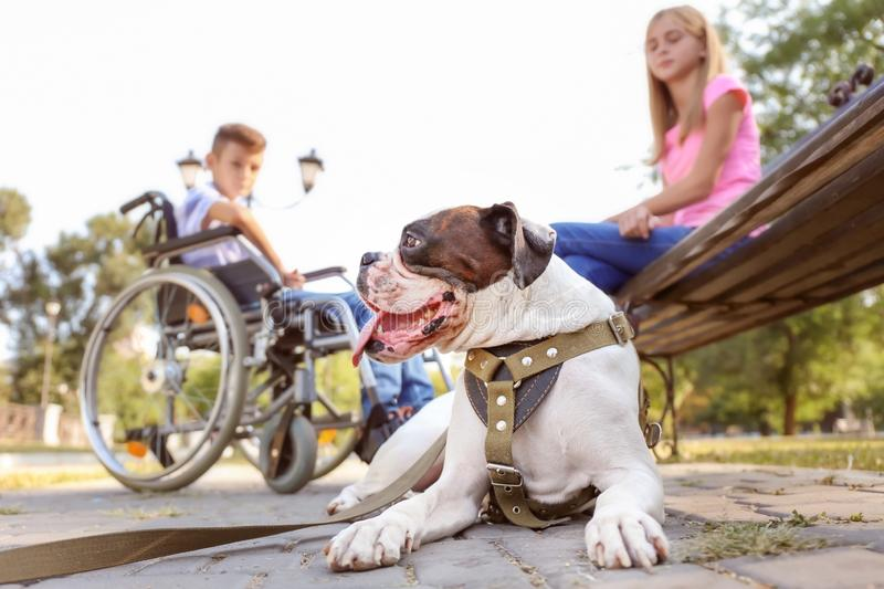 Cute dog, handicapped boy and his sister in park royalty free stock photos