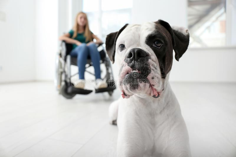 Cute dog and its handicapped owner at home royalty free stock photos