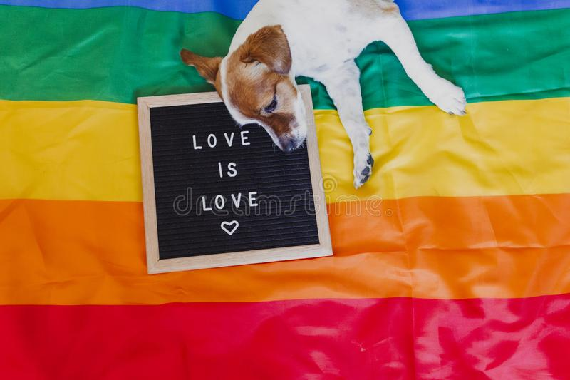 Cute dog jack russell sitting on rainbow LGBT flag in bedroom. Letter board besides with message LOVE IS LOVE.Pride month royalty free stock photos