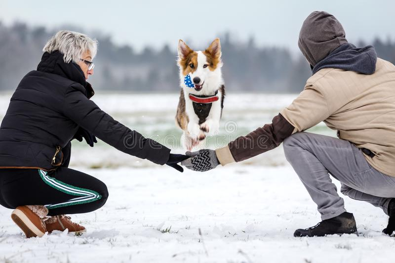 Cute dog is jumping over the arms of a couple, fun on the walk on wintertime. With snow stock image