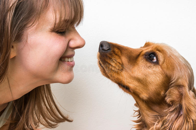 Cute dog kissing young woman stock image