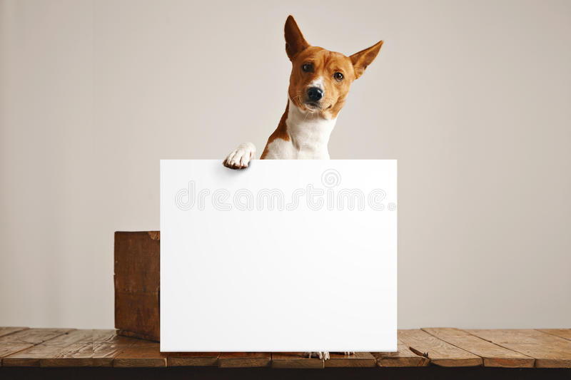Cute dog with a large blank sign stock photo