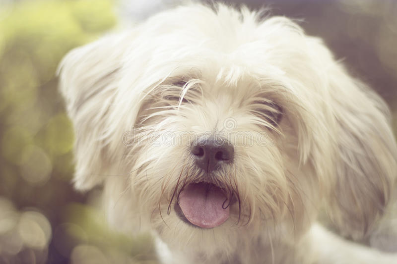 Cute dog in a park stock photo