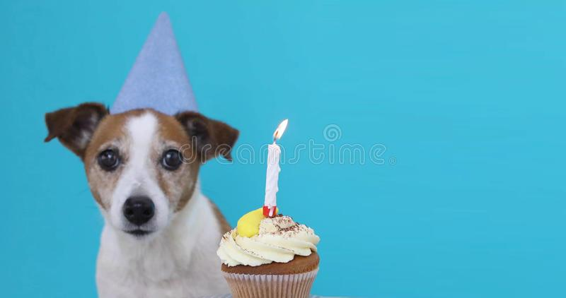 Cute dog with party hat and birthday cake royalty free stock image